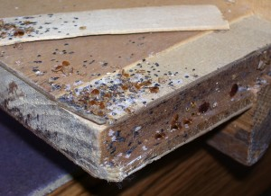 Bed bugs and their eggs
